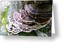 Fungus Growing Up  A Tree Greeting Card