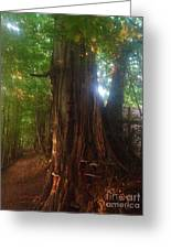 Fungus Tree Greeting Card