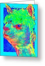 Funky Alpaca Baby Greeting Card