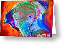 Funky Baby Elephant Blue Greeting Card