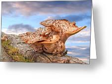 Funky Fungi Greeting Card