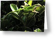 Fractal Nature South Carolina Green Lizard Greeting Card