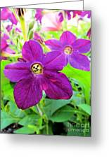 Funny Flower Faces Greeting Card