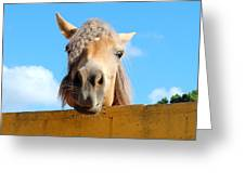 Funny Horse Greeting Card