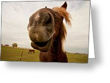 Funny Horse Greeting Card by Paulina Szajek