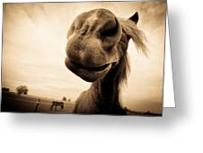 Funny Horse Sepia Greeting Card by Paulina Szajek