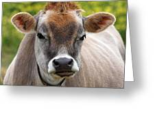 Funny Jersey Cow -square Greeting Card