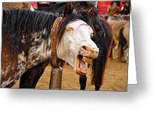 Funny Looking Horse Greeting Card