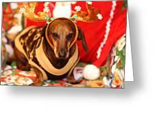 Funny Looking Reindeer Greeting Card