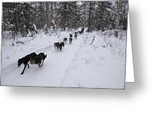 Fur Rondy Races Greeting Card