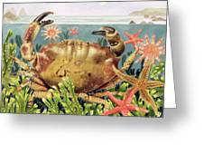 Furrowed Crab With Starfish Underwater Greeting Card