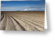 Furrows Greeting Card