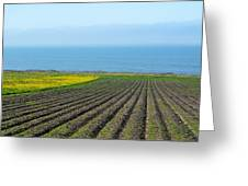 Furrows To The Sea Greeting Card