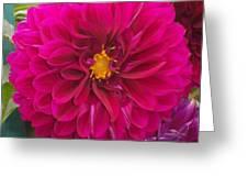 Fushia Greeting Card