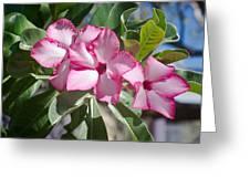 Fushia Oleander Near Phoenx Arizona 2 Greeting Card