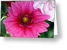 Fushia Pink Dahlia Greeting Card