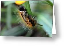 Fuzzy Caterpillar Greeting Card