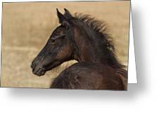 Fuzzy Colt Greeting Card