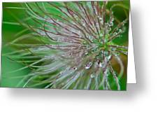 Fuzzy Flower Greeting Card by Sarah Crites