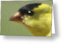 Fuzzy Gold Finch Greeting Card