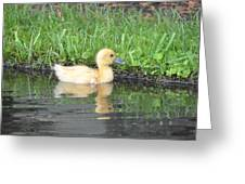 Fuzzy Little Yellow Duck Greeting Card