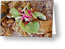 Fuzzy Plant On Blue Mesa Trail In Petrified Forest National Park-arizona  Greeting Card