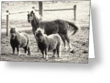 Fuzzy Ponies Greeting Card
