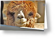 Fuzzy Wuzzy Alpaca Greeting Card by Helen Carson