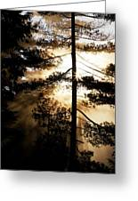 Fv5423, Perry Mastrovito Sunrise Though Greeting Card