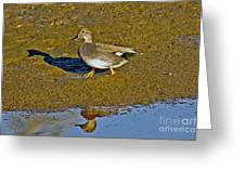 Gadwall Drake On Mudflat Greeting Card