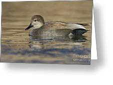 Gadwall On Icy Pond Greeting Card
