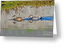 Gadwall Pair Swimming Together Greeting Card