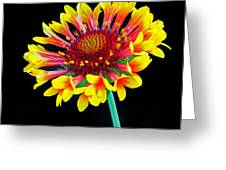 Gaillardia Arizona Sun Greeting Card