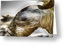 Galapagos Giant Tortoise V2 Greeting Card