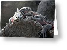 Galapagos Islands 09 Greeting Card