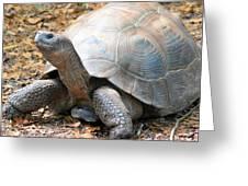 Galapagos Tortoise 2 Greeting Card
