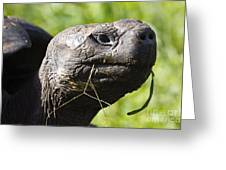 Galapagos Tortoise Galapagos Islands National Park Santa Cruz Island Greeting Card