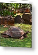 Galapagos Turtle At Honolulu Zoo Greeting Card