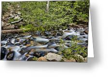 Galena Creek Greeting Card