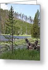 Gallatin River Yellowstone  Greeting Card