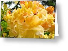 Gallery Fine Art Prints Yellow Orange Rhodies Greeting Card