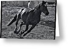 Gallop 2 Greeting Card