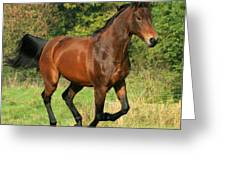 Gallop Greeting Card