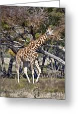 Galloping Giraffe  Greeting Card