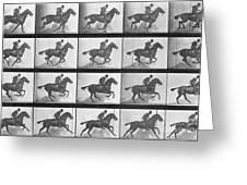 Galloping Horse Greeting Card by Eadweard Muybridge