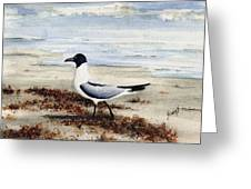 Galveston Gull Greeting Card