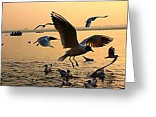 Ganges River Gulls Greeting Card