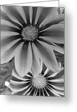 Ganzia In Black And White Greeting Card