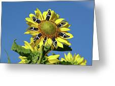 Garciacat Sunflower Greeting Card