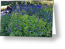 Garden Bench And Sage Greeting Card